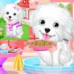 Stray Dog Care